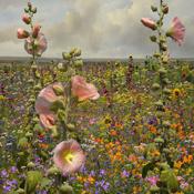 3-Saskia-bloemen.jpg